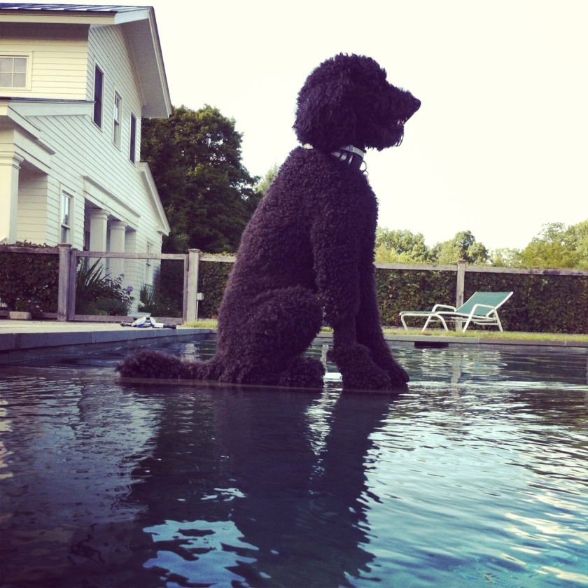 Remy walk on water